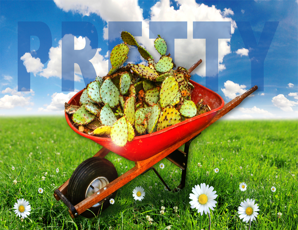 pretty_cactus_barrow2_web